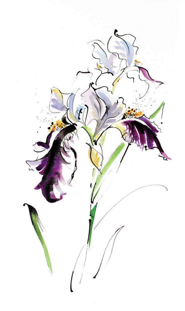 Blue Iris, a watercolour painting by Julie King