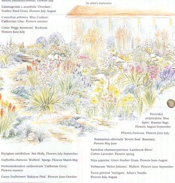 Garden Illustrations in Pen and Wash