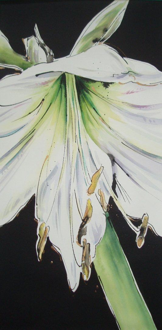 White Amaryllis, a watercolour painting by Julie King